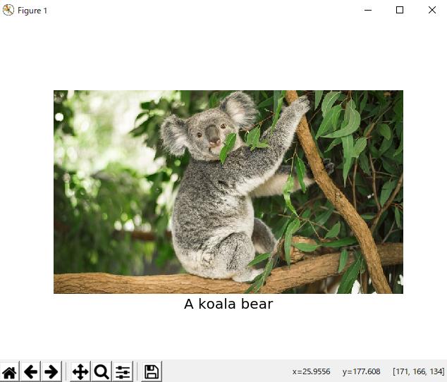 コアラが木にぶら下がっている